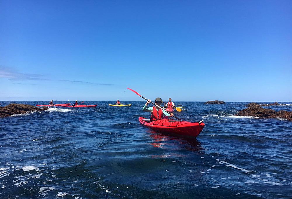 Ruta de media jornada en kayak de mar en Urdaibai, Bizkaia, Costa Vasca